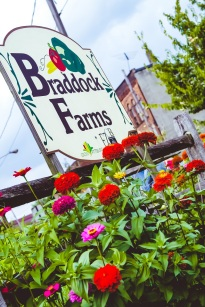 Braddock Farms brings hope and fresh produce to Braddock.
